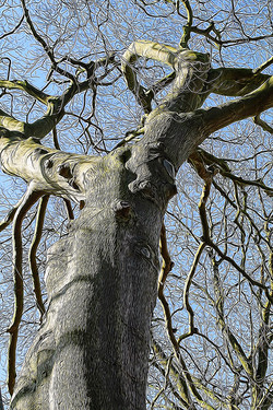 tangled bare tree