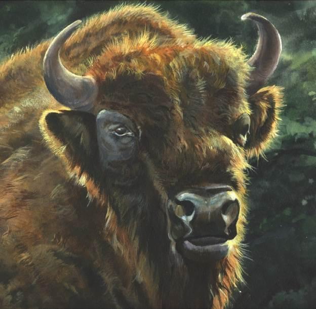 European bison ot Wisent