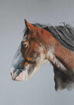 clydesdale finished