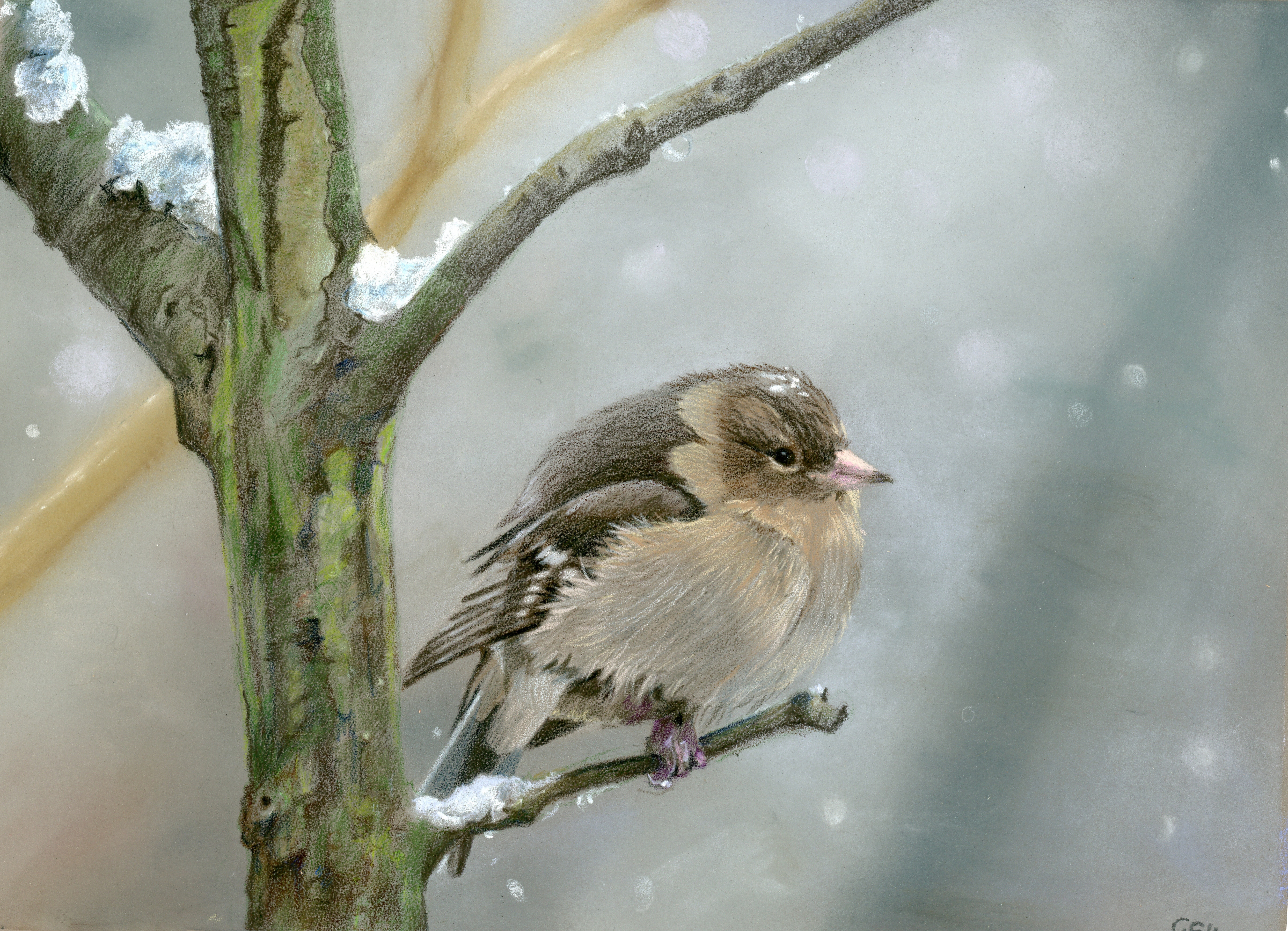 sparrow for facebook only