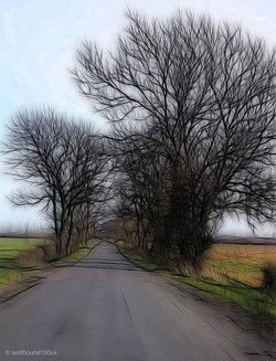 Tangled roadside trees