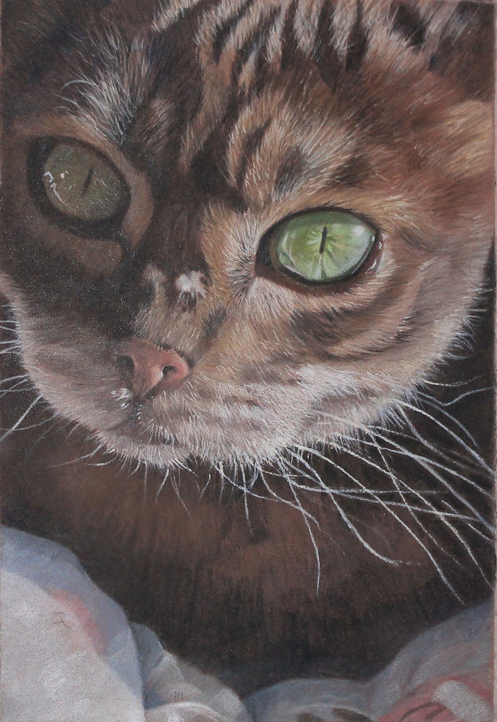 A portrait of my cat