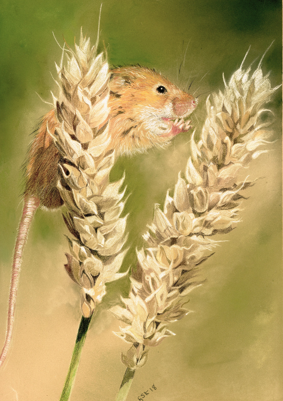harvest mouse for card
