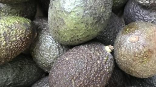 Avocat bio, origine Espagne - la pièce