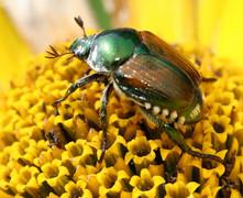 Pest Management Solutions