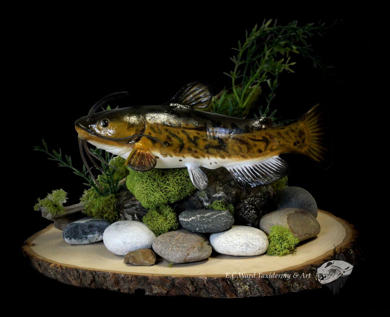 Bullhead Catfish Repo