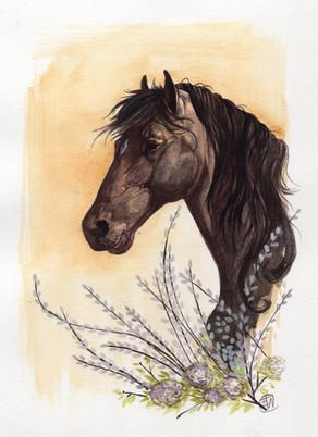 horse wc029.jpg