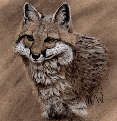 Grey Fox charcho.jpg