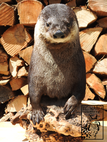 otter with icon.png