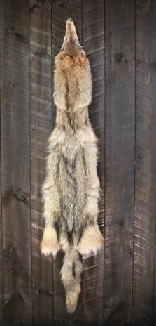 Coyote Pelt #1