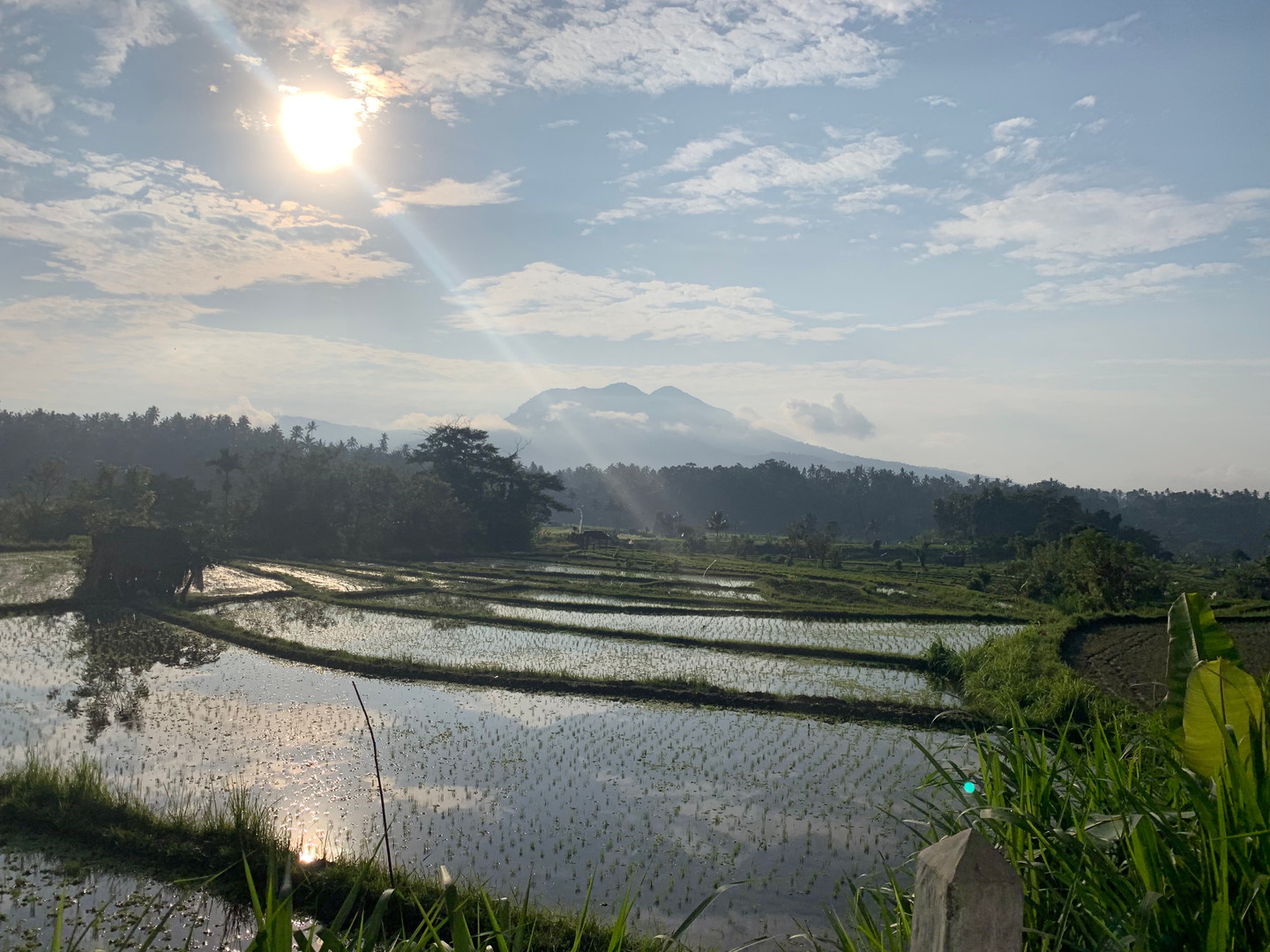 Sweeping Plains of rice fields