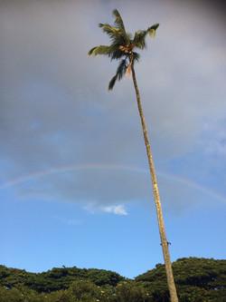 hawaii listed species
