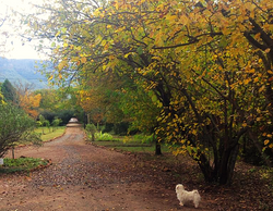 Iris Retreat Autumn views