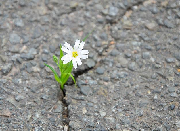 Solitary flowers on the street.jpg