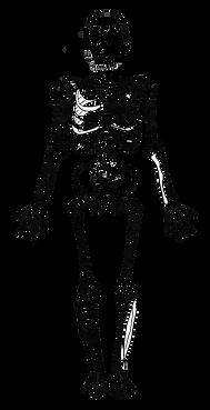 skeleton1.png