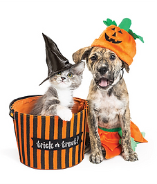 dog and cat halloween.png