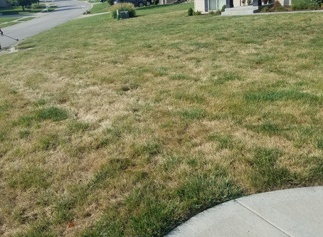 Is your lawn needing reseeded?