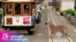 poster_tiger_01.jpg