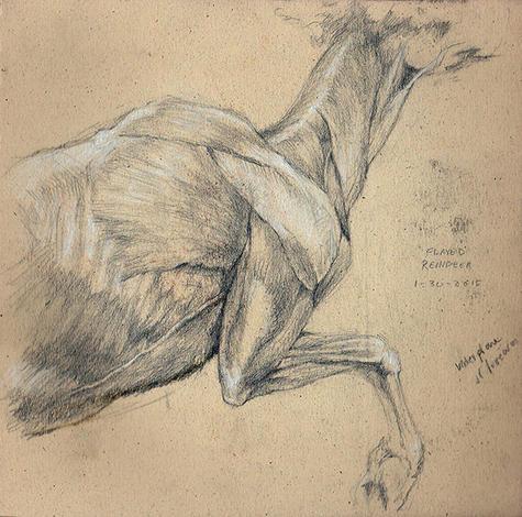 """""""Anatomy of a reindeer"""" - Pencil sketch"""