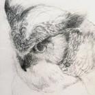 Great_Horned_Owl_edited.jpg