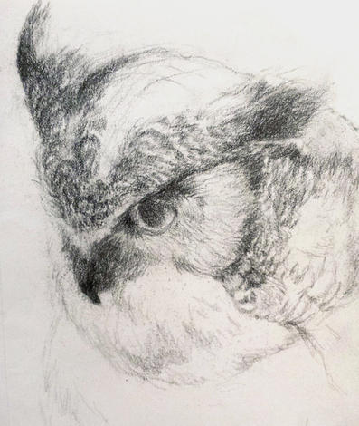 """""""Great horned owl"""" - Pencil sketch"""