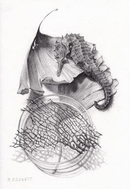 """""""Seahorse, Ginko, Coral"""" - Graphite drawing"""