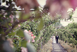 Chinese wedding ceremony at home in Garden, Toorak Melbourne