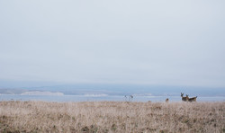 Point Reyes photography