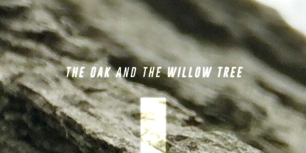 The Oak and the Willow Tree