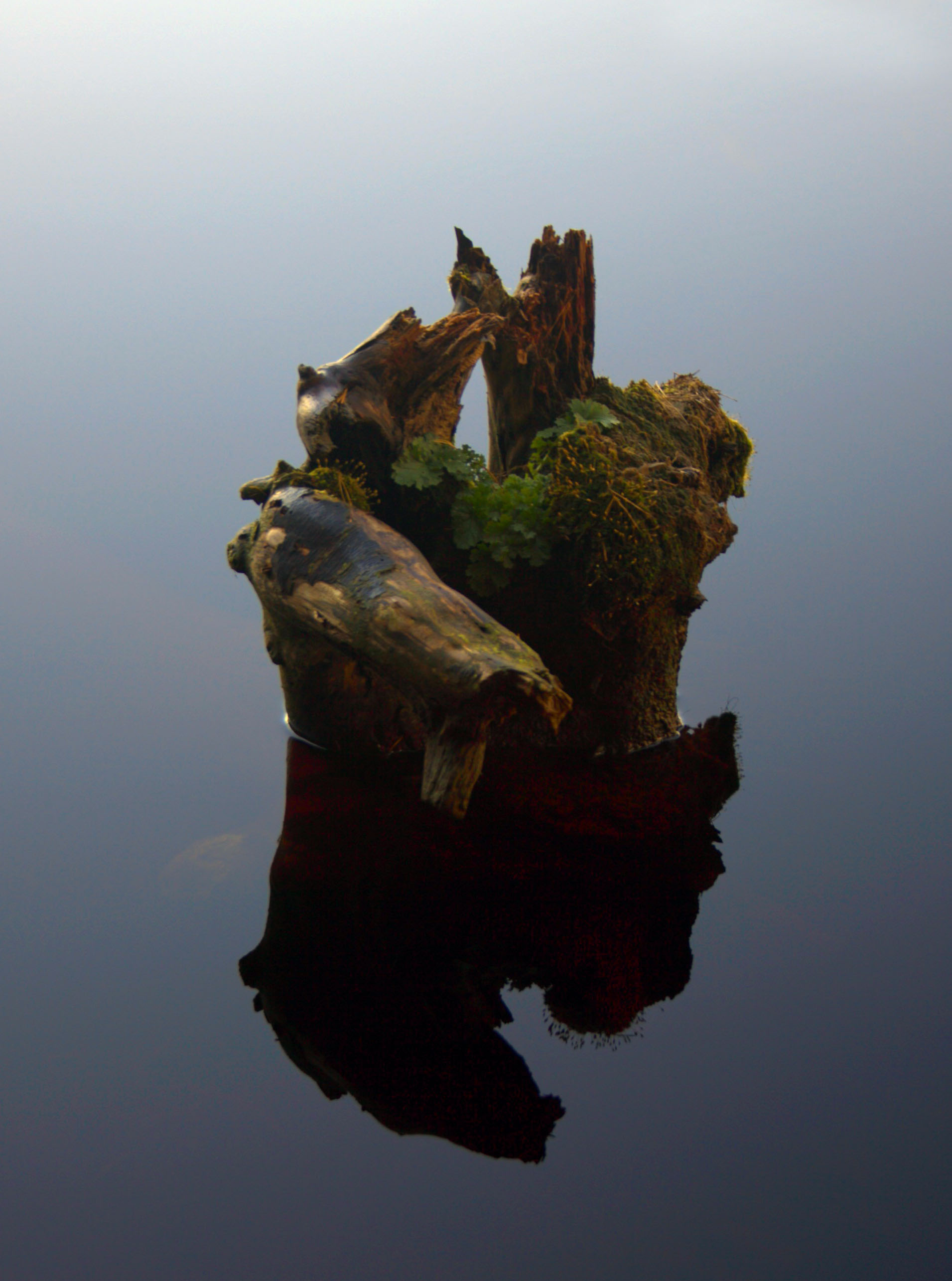 Exposed stump in water