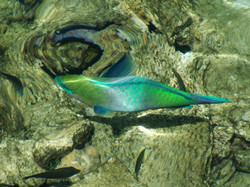 Fish in the Red Sea at Hurghada