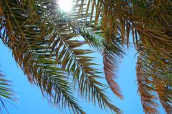 Palms against the sky Egypt