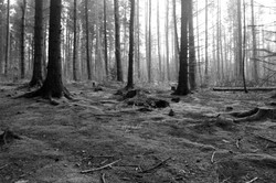 Yorkshire wood in winter