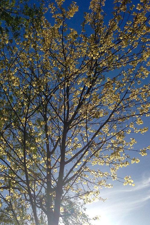 Autumn Tree  DOWNLOAD