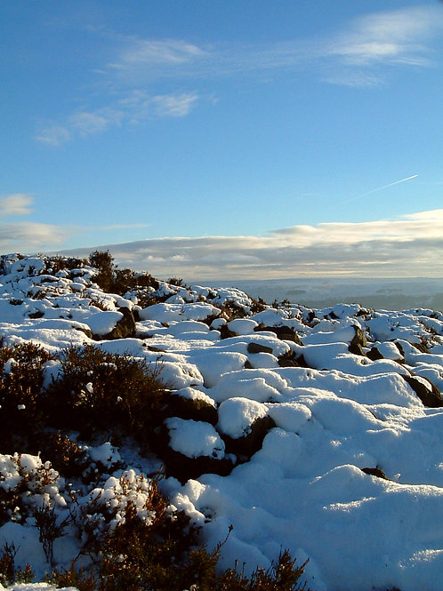 First Snow on heather at Beamsley, North Yorkshire