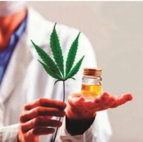 O poder da cannabis medicinal