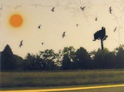 Blankboard with Birds