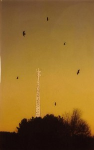 Bird Tower II