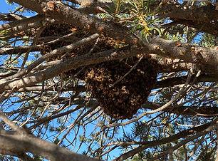 Albuquerque_Swarm_Removal.jpg