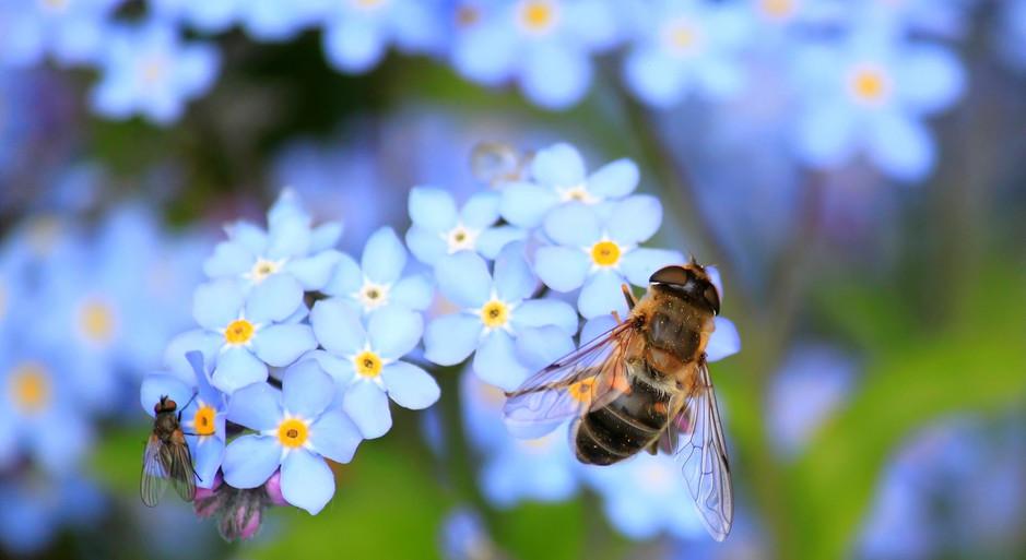 albuquerque-bee-removal.jpg