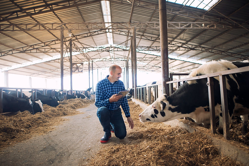 farmer-and-cows-at-dairy-farm_edited.jpg