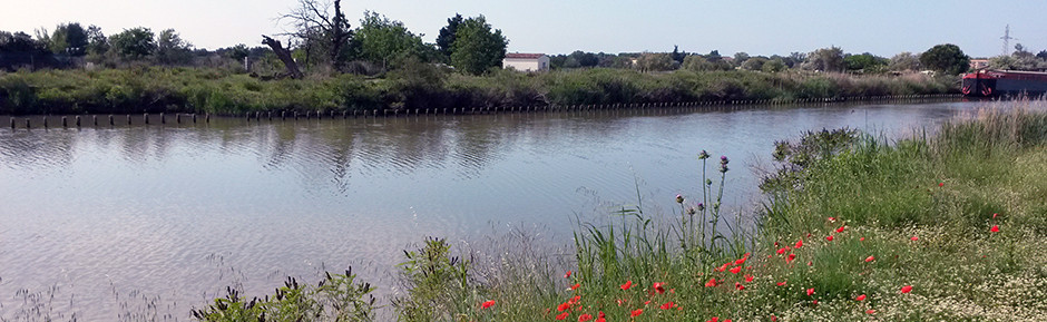Trek en Petite Camargue Canal du Rhône