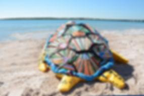 Copy of Turtle Back.jpg