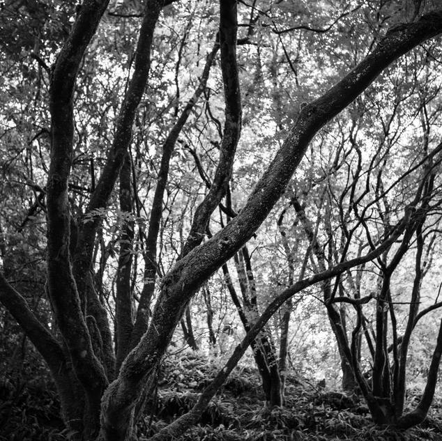 'Forest Bathing' by Kenneth Gray