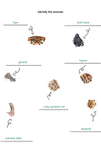 Identify the animals