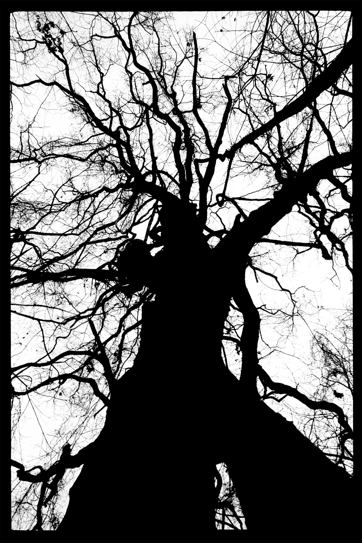 Arboreal Humanoid, Photographic Print