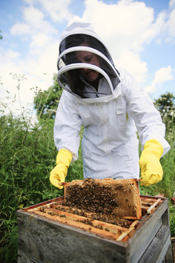 Honey & Beeswax from our hives