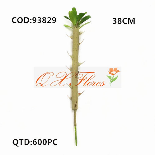 QX CACTO 93829