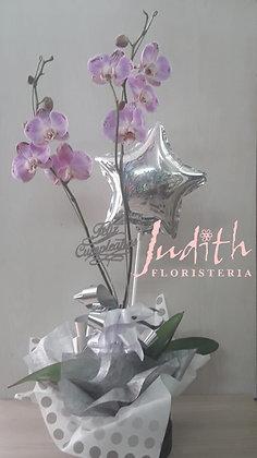 T74- Planta natural de orquídeas