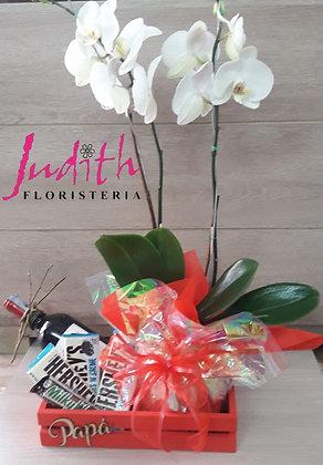 T14- Planta Orquídea, Licor y chocolates